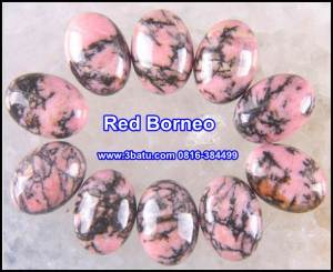 Red Borneo Polos