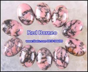 Red Borneo Polos
